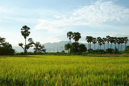 filed: Rice filed, rainbow and mountain : Thailand Stock Photo