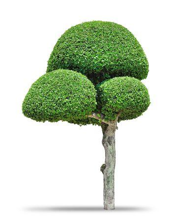 shaped: Fancy shaped decorative tree