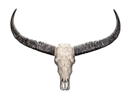crâne Tête de buffle d'eau sauvage (Bubalus arnee) isolé sur fond blanc