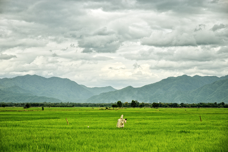 espantapajaros: Campos de arroz con el espantapájaros y las montañas de fondo: Tailandia