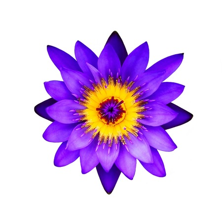 Close up purple lotus flower on a white background : Top view