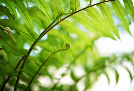 Close up green fern leaf in garden 版權商用圖片