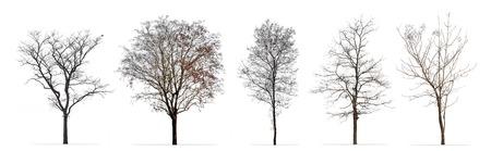 Zestaw zimowych drzew bez liści na białym tle