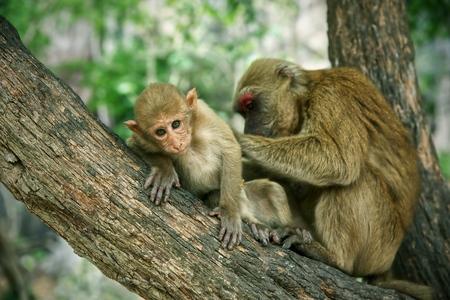 Little monkey have finding tick on skin on tree