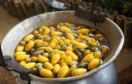 Boiling yellow silkworm cocoons by boiler to make silk thread : Closeup 스톡 콘텐츠