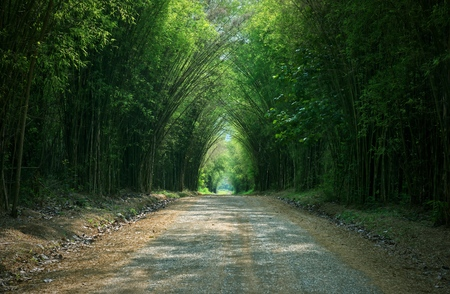 Tunnel bamboo tree and walkway : Thailand 스톡 콘텐츠