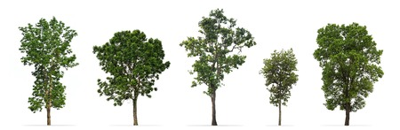 Collection of trees isolated on white background 스톡 콘텐츠