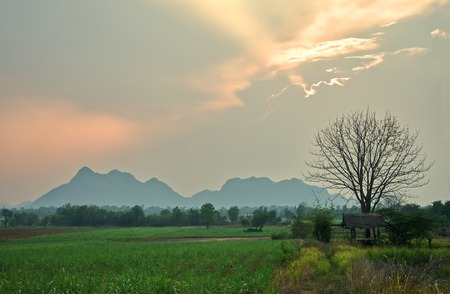 Small wooden hut under tree on green fields and mountain background : Thailand