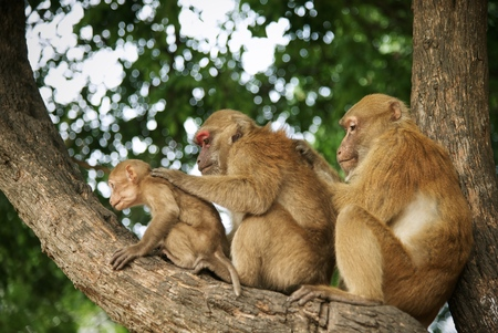 Monkey family have finding tick on skin on tree