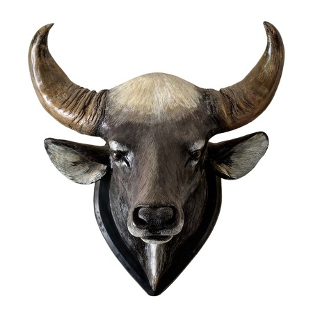 Statue of gaur head isolated on white background