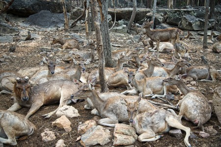 Group of deer sitting in the nature 스톡 콘텐츠 - 107238354