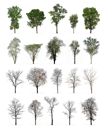 Set of spring and winter trees isolated on white background : Different kinds of tree collection 스톡 콘텐츠