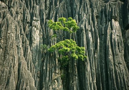 Tree outcrop on limestone mountain 스톡 콘텐츠