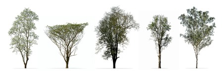 Collection of trees isolated on white background Standard-Bild