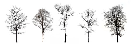 Collection of trees without leaves isolated on white background