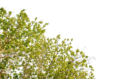 Tree branch isolated on white background