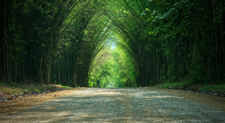 Panorama of tunnel bamboo trees road : Thailand