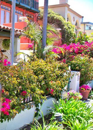집 앞의 꽃