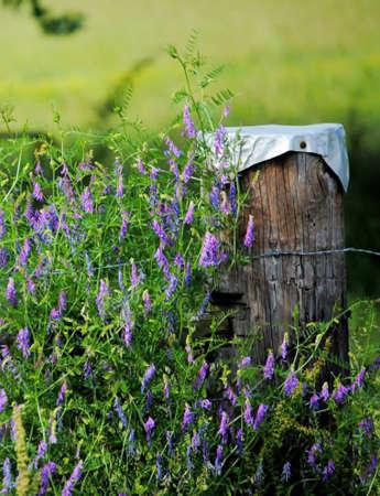 fencepost: Country Scenery Stock Photo