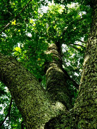 branched: Branched Tree