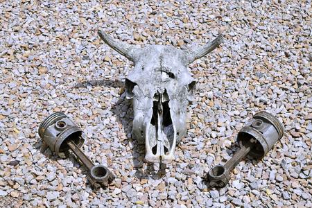 animal skull: Bull Skull with Pistons
