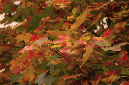 autumn leaf Stock Photo - 7985569