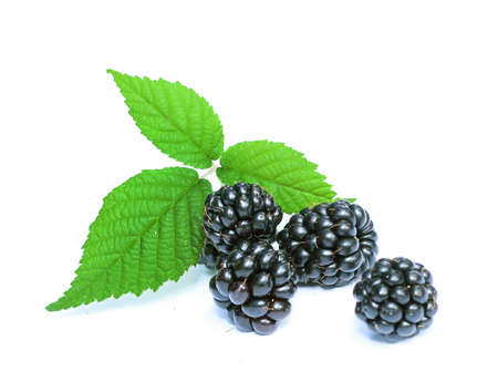 organic blackberries isolated on a white background Stock Photo