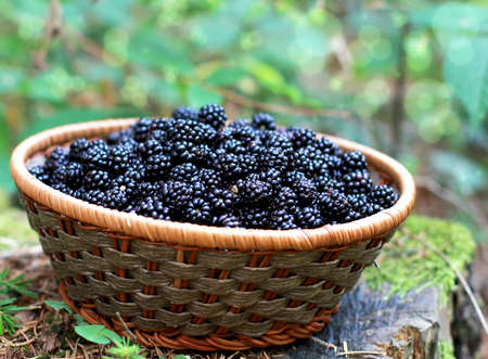 organic blackberries from the forest Stock Photo