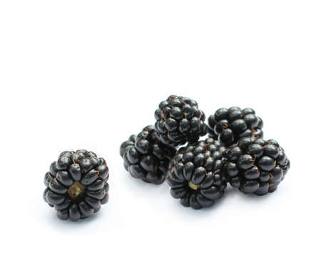 organic blackberries isolated photo