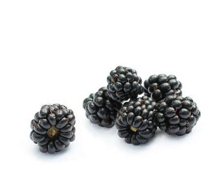 organic blackberries isolated photo