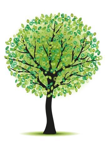 Vogelbeere: Schönheit grünen Baum auf weißem bacground isoliert Illustration