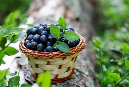 beautiful blueberries from the wood Stock Photo