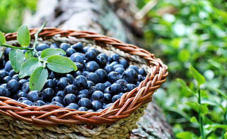 blueberry in a basket photo