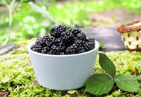 bowl with fresh  blackberry fruits photo