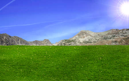 grass beautiful: Beautiful field of grass in mountain