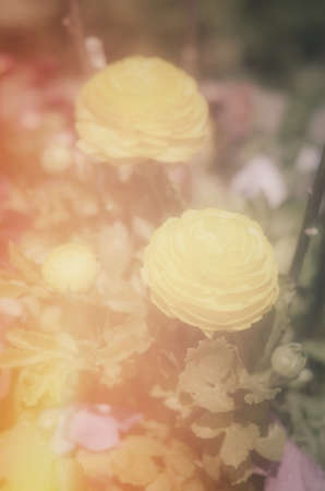 Yellow peony trio with light leak and vertical orientation