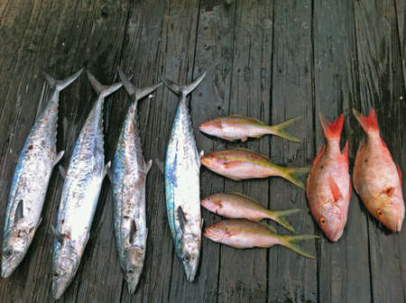 Various freshly caught fish artistically displayed on old wooden dock.