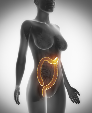 anatomy naked woman: Female COLON anatomy x-ray scan