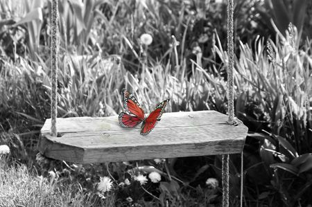 Red butterfly on black and white background.. concept purity