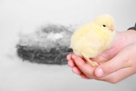 cute chick photo