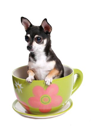big tea cup with a dog in it.