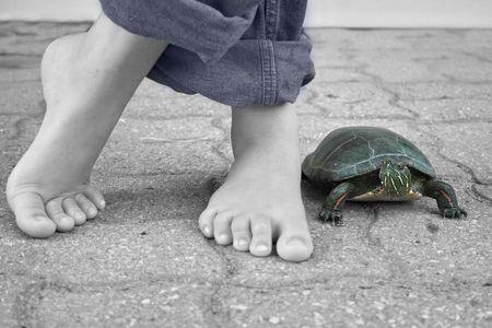 Solo a piedi con la mia tartaruga per animali da compagnia. Archivio Fotografico - 1064037