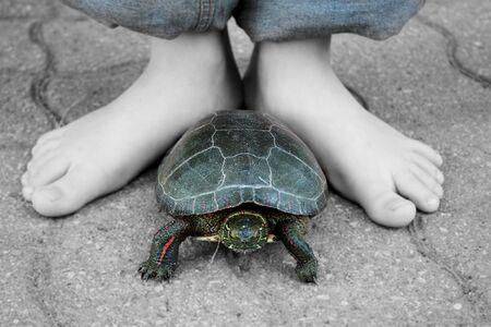 Amigos de la infancia, un ni�o y su mascota, la tortuga