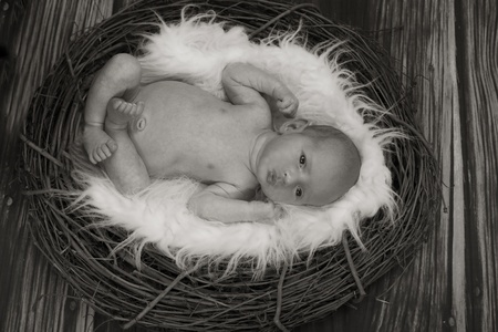 Concept image of newborn looking like a baby bird in a nest photo