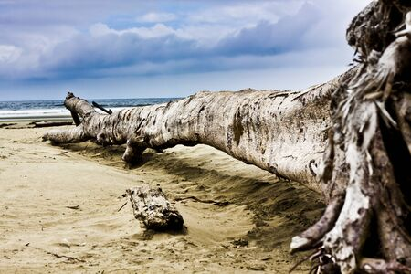 An ocean view with a fallen tree  Sand, waves and sky