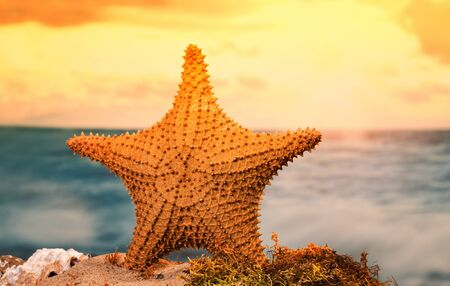 Tranquil sunset with starfish