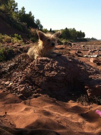 ビーチの上に敷設する犬 写真素材