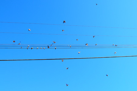 Birds on a wire and in action on a blue bird day