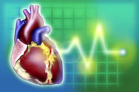 heart monitor: Heart Rate Monitor