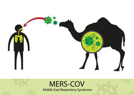 MERS Corona Virus transfer from camel to human Illustration